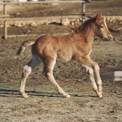 horses_3