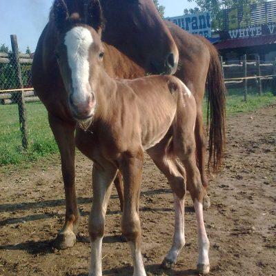 horses_4