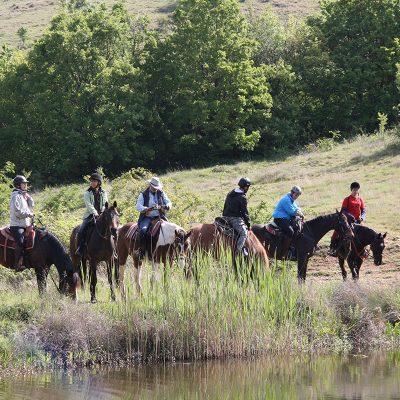 horses_slider